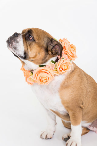 Peach Rose Collar