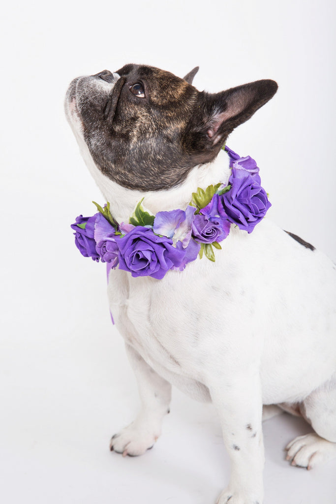 Purple Rose Collar