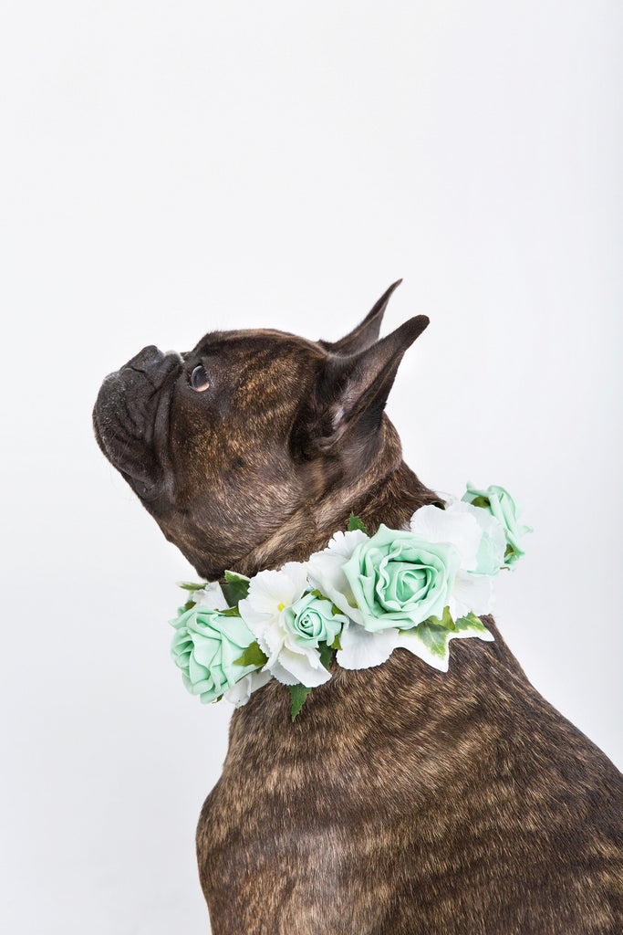 Mint Green Rose Collar