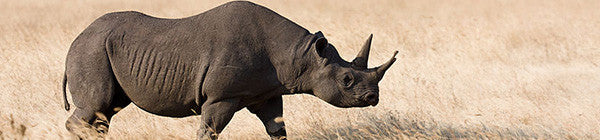Protecting wildlife from poachers
