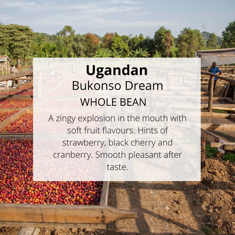 Ugandan Bukonzo Dream - Well Roasted Coffee