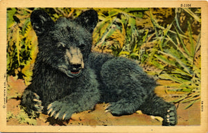 Animal Collectible Vintage Postcards