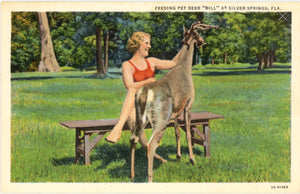 Silver Springs Florida Bathing Beauty Feeding Pet Deer Vintage Postcard (unused) - Vintage Postcard Boutique