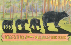 Yellowstone National Park Mother Bear & Cubs Wyoming Vintage Postcard (unused) - Vintage Postcard Boutique