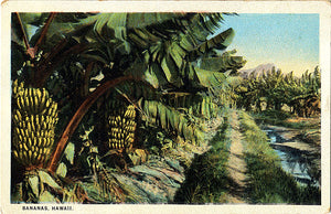 Hawaii Bananas Trees Cultivation Vintage Botanical Postcard - Vintage Postcard Boutique