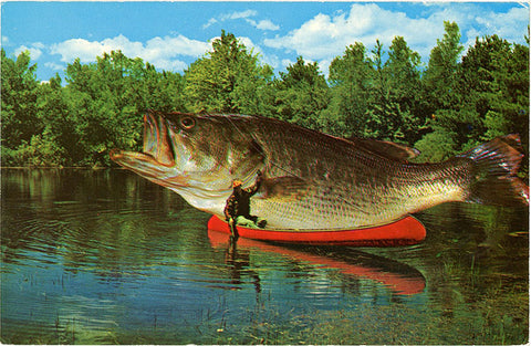 Fishing Big One That Got Away Comic Exaggeration Vintage Postcard (unused) - Vintage Postcard Boutique