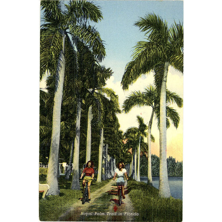 Pretty Girls Biking on Royal Palm Trail Florida Vintage Postcard (unused) - Vintage Postcard Boutique