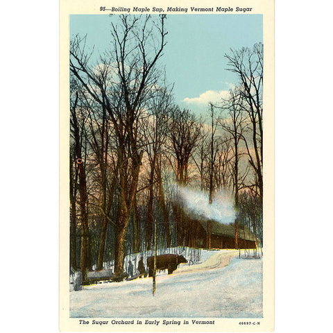 Vermont Sugar Orchard Boiling Maple Sap in Early Spring Vintage Postcard (unused)