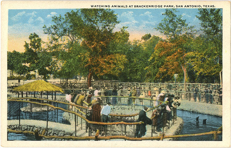 San Antonio Texas Breckenridge Park Zoo People Watching Animals Vintage Postcard (unused) - Vintage Postcard Boutique
