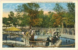 San Antonio Texas Breckenridge Park Zoo People Watching Animals Vintage Postcard (unused)