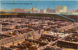 Union Stock Yards Meat Packing Industry Chicago Illinois Vintage Postcard 1954 - Vintage Postcard Boutique
