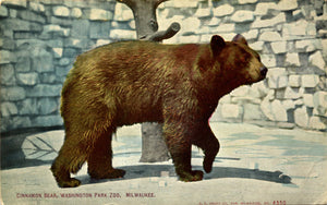 Washington Park Zoo Milwaukee Wisconsin Cinnamon Bear Vintage Postcard (unused) - Vintage Postcard Boutique