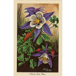 Colorado State Flower - Rocky Mountain Columbine Vintage Botanical Postcard Signed Artist Ken Haag (unused) - Vintage Postcard Boutique