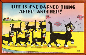 Black Cats & Kittens Vintage Comic Postcard (unused) - Vintage Postcard Boutique