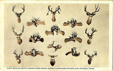 San Antonio Texas Albert's Buckhorn Saloon Deer Heads Vintage Postcard (unused) - Vintage Postcard Boutique