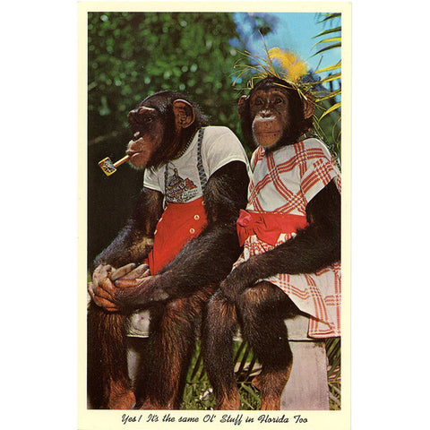 Dressed Chimpanzees Monkey Jungle Miami Florida Vintage Postcard (unused) - Vintage Postcard Boutique