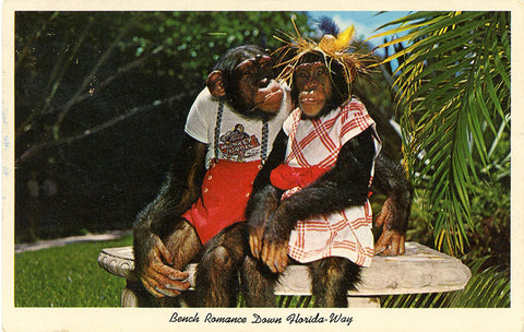 Dressed Chimpanzees on Bench Monkey Jungle Miami Florida Vintage Postcard 1963 - Vintage Postcard Boutique