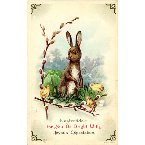 Eastertide Bunny and Chicks Vintage Postcard Embossed circa 1910 - Vintage Postcard Boutique