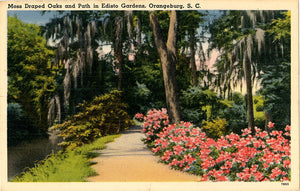 Orangeburg South Carolina Edisto Gardens Moss Draped Oaks Vintage Postcard (unused) - Vintage Postcard Boutique