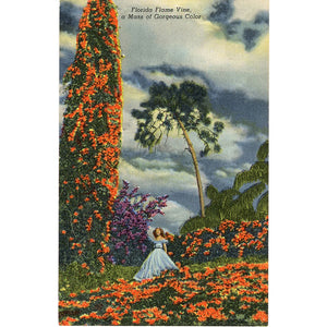 Cypress Gardens Florida Flame Vine Pretty Lady Vintage Postcard (unused) - Vintage Postcard Boutique