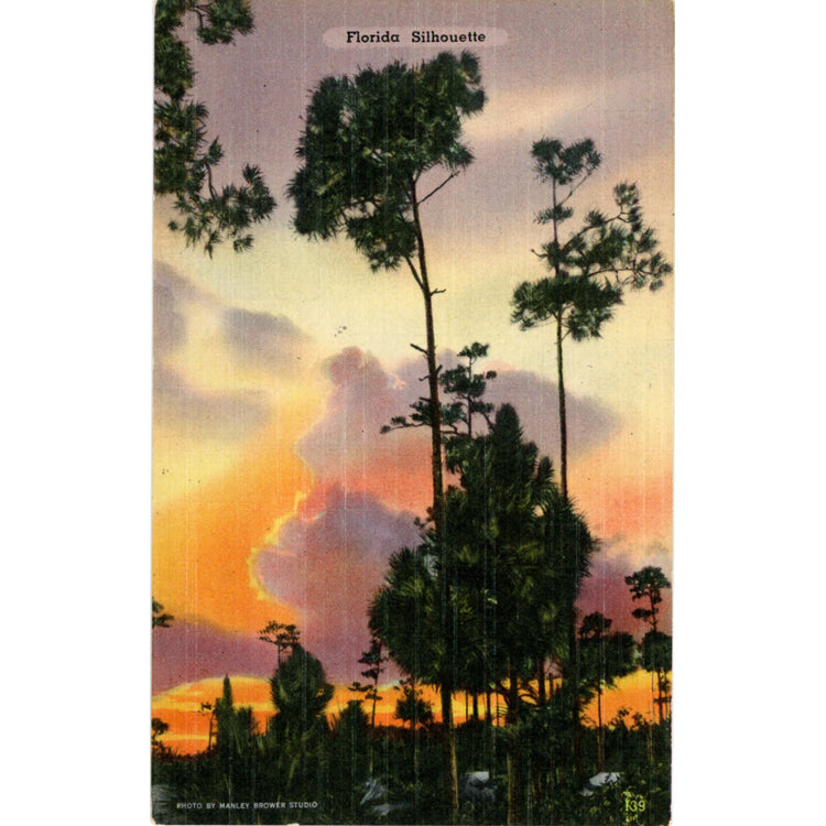 Florida Sunset Palm Trees Silhouette Vintage Postcard (unused) - Vintage Postcard Boutique