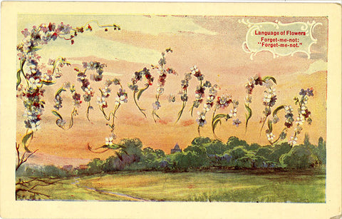 Forget-Me-Not Language of Flowers Vintage Botanical Postcard - Vintage Postcard Boutique