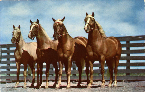 Horses – Blue Bloods of Texas Vintage Postcard (unused) - Vintage Postcard Boutique