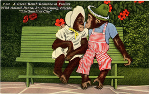 St. Petersburg Florida Wild Animal Ranch Romantic Chimpanzees Vintage Postcard (unused)