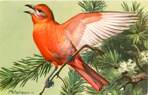 Hepatic Tanager Vintage Bird Postcard National Wildlife Federation Songbird Series SIGNED Peterson - Vintage Postcard Boutique