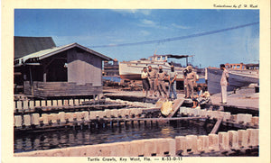 Key West Florida Turtle Crawls Vintage Postcard ca. 1950s (unused) - Vintage Postcard Boutique