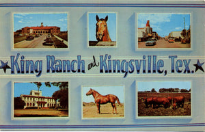 King Ranch Kingsville Texas Quarter Horses Santa Gertrudis Cattle Vintage Postcard (unused) - Vintage Postcard Boutique