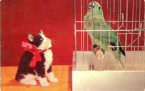 Kitten Eyeing Parrot in Bird Cage Vintage Postcard (unused) - Vintage Postcard Boutique