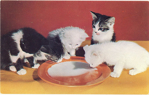 Kittens Drinking Milk Vintage Postcard (unused) - Vintage Postcard Boutique