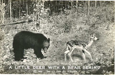 Little Deer with Bear Behind Comic Real Photo Vintage Postcard RPPC (unused) - Vintage Postcard Boutique