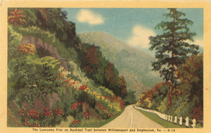 Williamsport & Emphorium Pennsylvania Lonesome Pine on Bucktail Trail Vintage Postcard (unused)