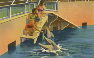 Marineland Florida Bathing Beauties Feeding Porpoises at Marine Studios Oceanarium Vintage Postcard (unposted) - Vintage Postcard Boutique