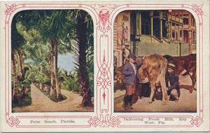 Key West Florida Delivering Fresh Milk Cow Vintage Postcard (unused) - Vintage Postcard Boutique