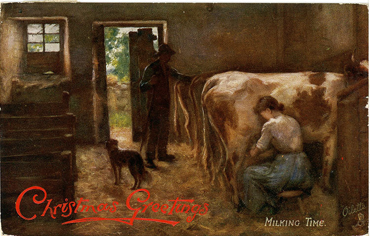 Scottish Milking Time Tuck's Oilette Embossed Christmas Vintage Postcard 1908 - Vintage Postcard Boutique