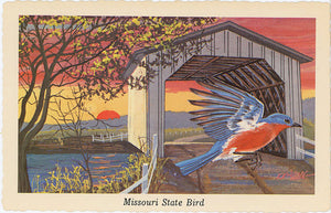 Missouri State Bird - Bluebird Vintage Postcard Signed Artist Ken Haag (unused) - Vintage Postcard Boutique