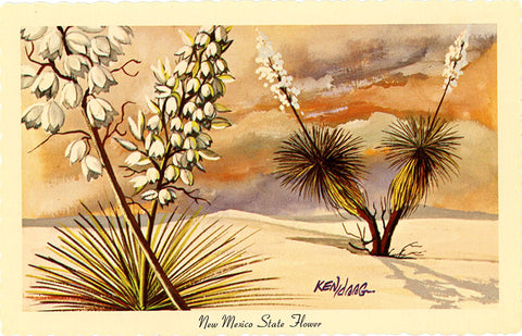New Mexico State Flower - Yucca Vintage Botanical Postcard Signed Artist Ken Haag (unused)