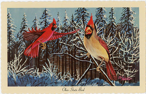 Ohio State Bird Cardinals in Snow Vintage Chrome Postcard (unused) Signed Ken Haag