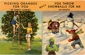 Picking Oranges in Sunny Florida Snowballs in North Vintage Postcard 1948 - Vintage Postcard Boutique