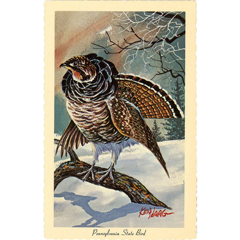 Pennsylvania State Bird - Ruffed Grouse Vintage Postcard Signed Artist Ken Haag (unused)