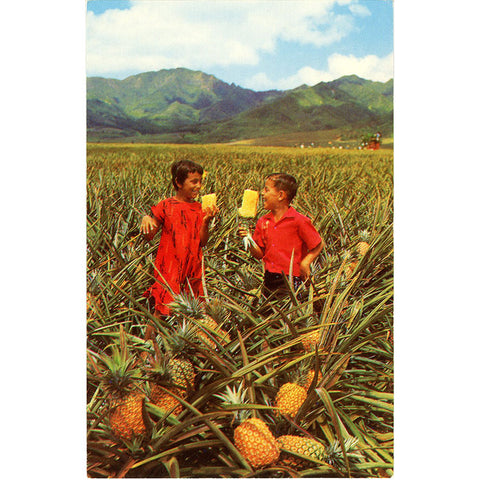 Hawaii Field Ripe Pineapples Del Monte Vintage Botanical Postcard 1950s (unused) - Vintage Postcard Boutique