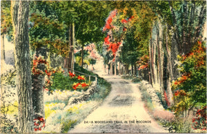 Pocanos Pennsylvania Woodland Trail Vintage Postcard (unused)