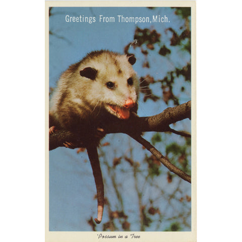 Thompson Michigan Possum in Tree Vintage Postcard (unused) - Vintage Postcard Boutique