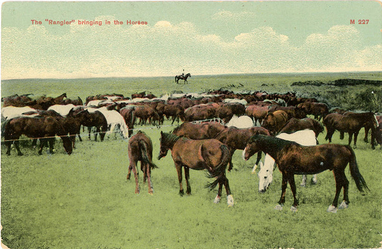 Vintage Western Postcard – Cowboy Rangler Bringing in the Horses (unused) circa 1910 - Vintage Postcard Boutique