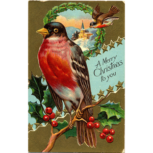 Merry Christmas Gold Embossed Robin Vintage Postcard - Xmas Bird Series