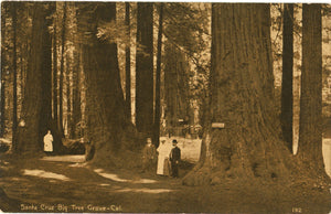 Santa Cruz People in Big Tree Grove Redwoods California Vintage Postcard circa 1910 (unused) - Vintage Postcard Boutique