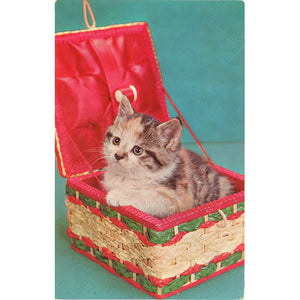 Kitten in Sewing Box Vintage Postcard (unused) - Vintage Postcard Boutique